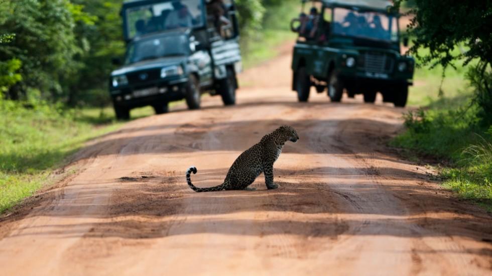 Image result for Yala National park