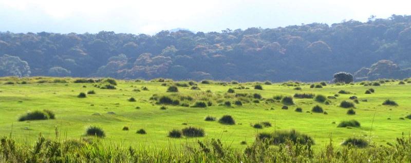 Image result for horton plains