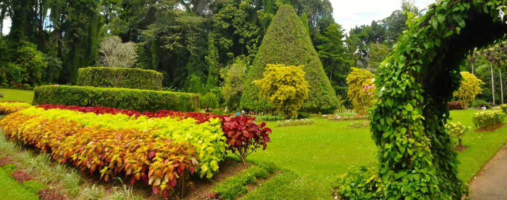 Image result for peradeniya botanical garden
